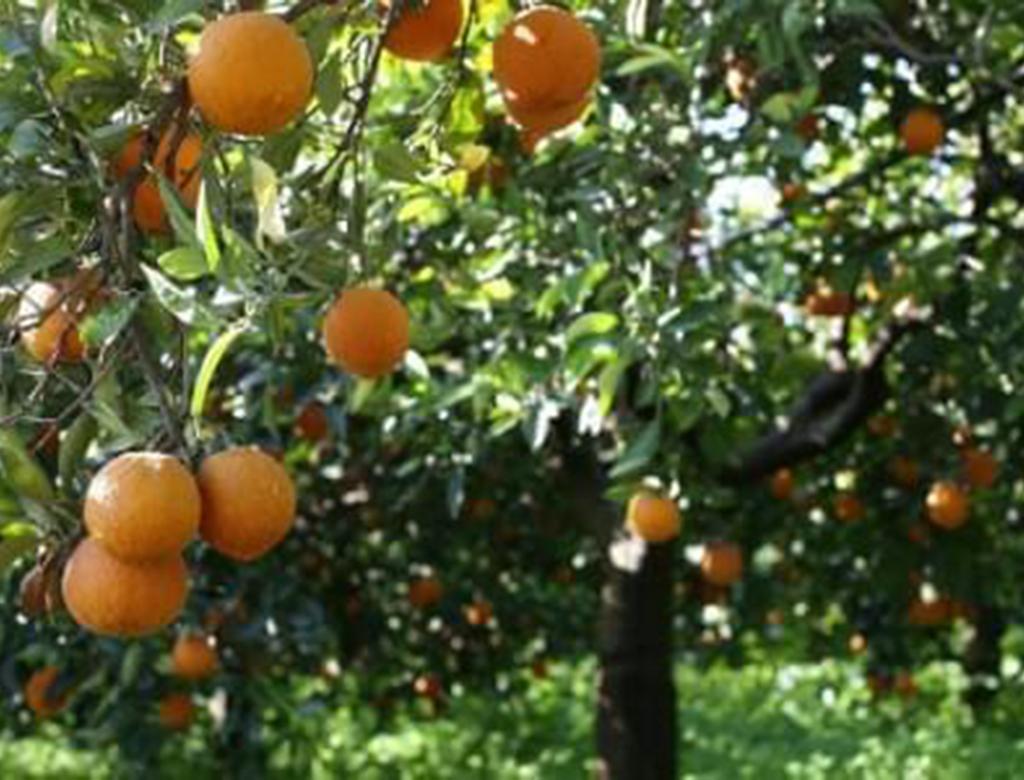 Favorire l'agricoltura in Sicilia non è favorire la scomparsa dei piccoli coltivatori.