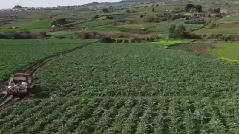 Prezzi troppo bassi. Protestano gli agricoltori madoniti : «costretti a distruggere i raccolti»