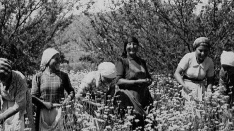 Le Gelsominaie di Milazzo. Il primo sciopero delle donne siciliane.